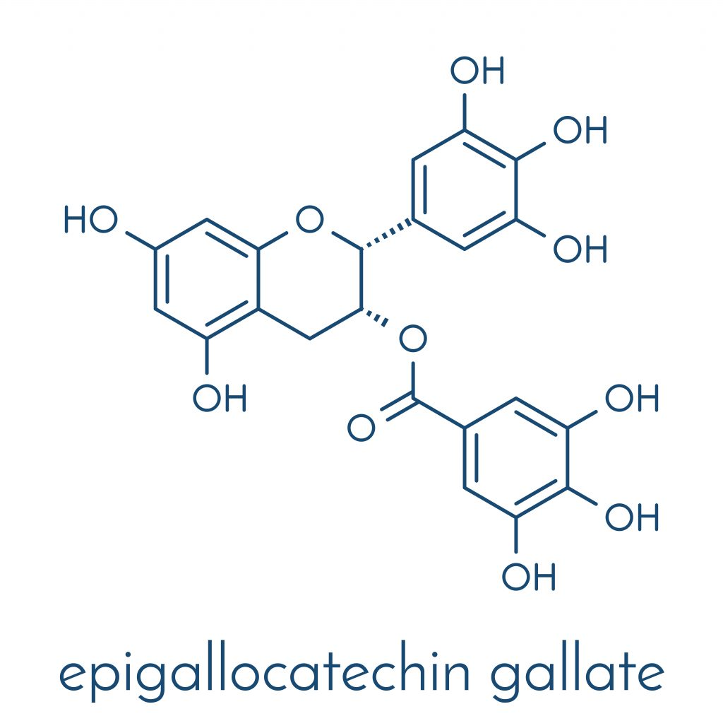 Chemical structure of Epigallocatechin gallate - one of the most common polyphenols