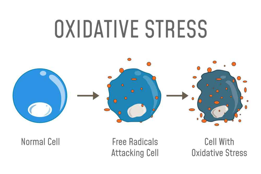 Mechanism of oxidative stress actions - the result of excessive free radicals inside our organism