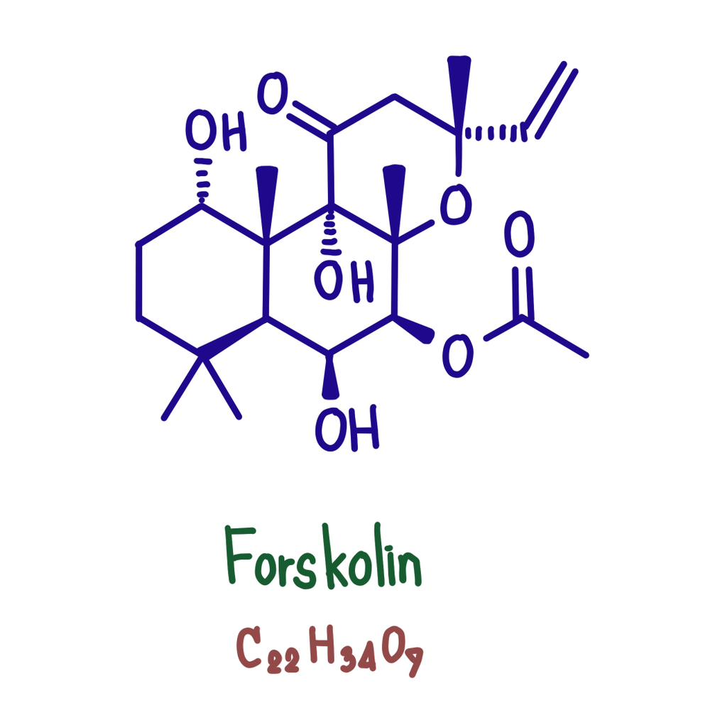 Chemical structure of Forskolin - main active substance of Indian Nettle