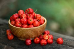 Acerola – the best natural source of vitamin C