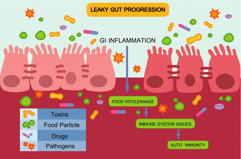 Development of leaky guts condition