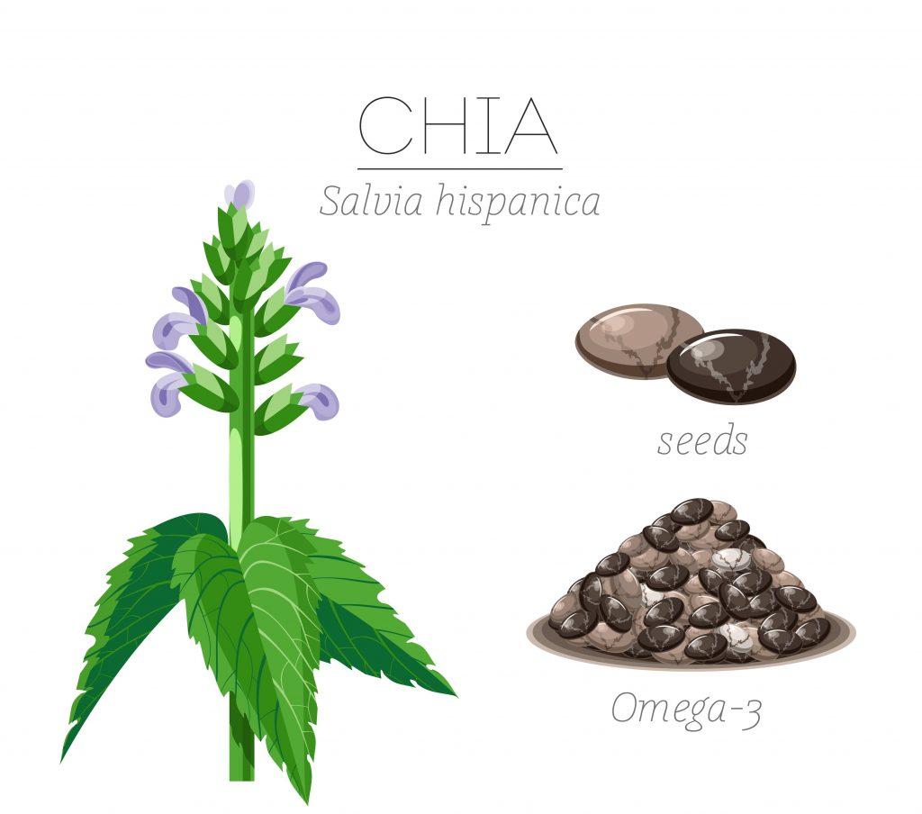 Chia seeds are treasury of healthy omega 3 fatty acids